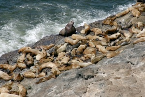 photo-sea-lion-01